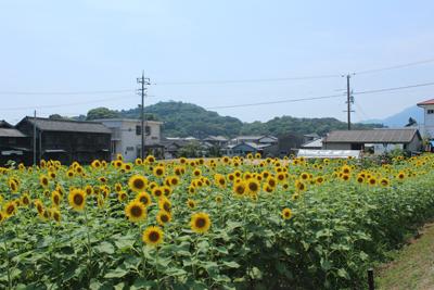 himawari1.jpg