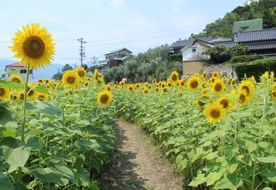 himawari9.jpg