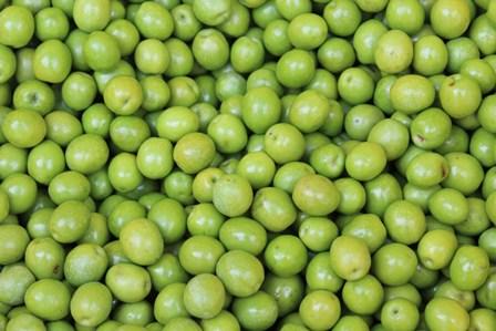 オリーブ収穫�E.jpg